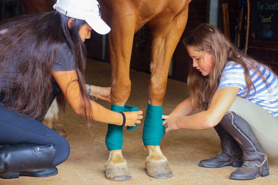 Two girl campers wrap the legs of a chestnut horse at an overnight horseback riding camp in Virginia