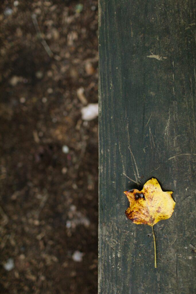 Fallen autumn leaf on wood