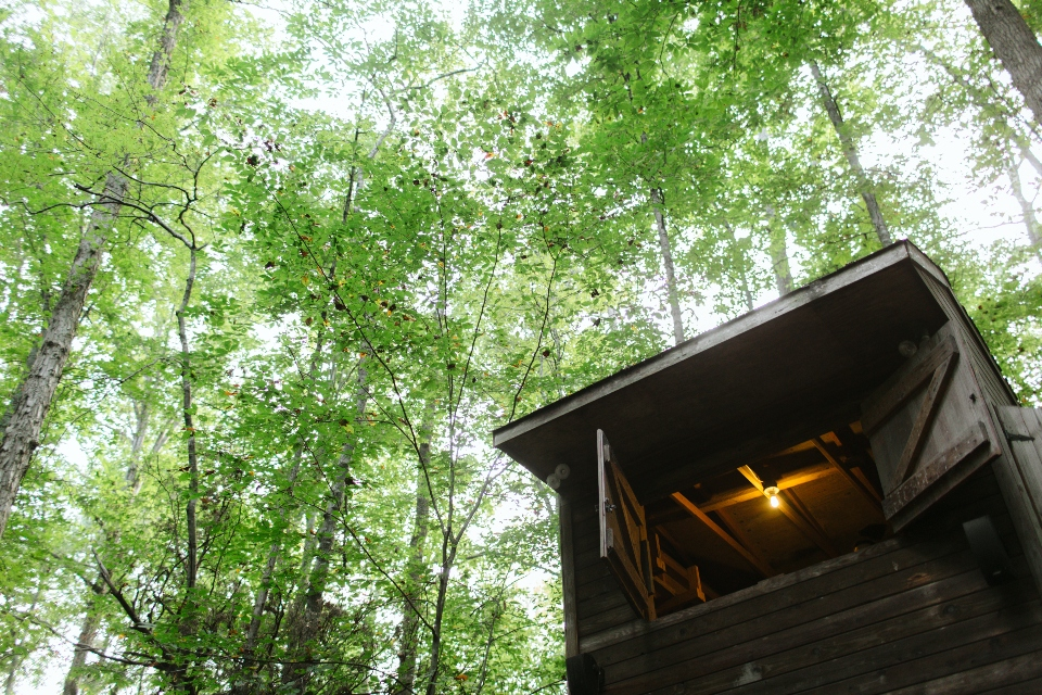 Looking up at the trees and a wooden building with one light on inside